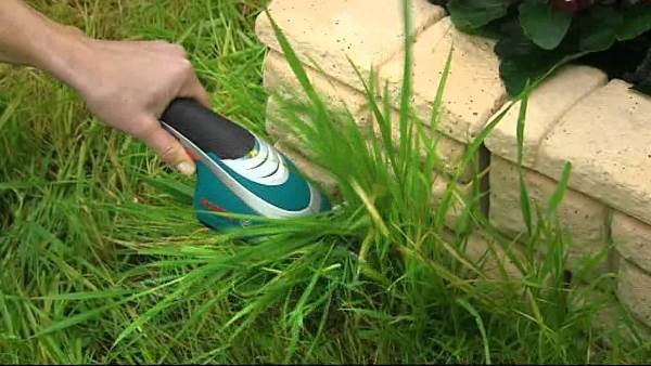Не забывайте ухаживать за травой, подрезать ее, защищать от сорняков