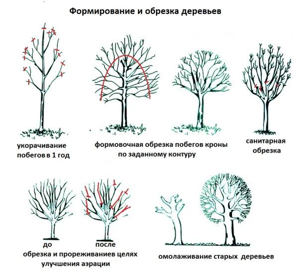Обрезая ветви, мы улучшаем состояние дерева