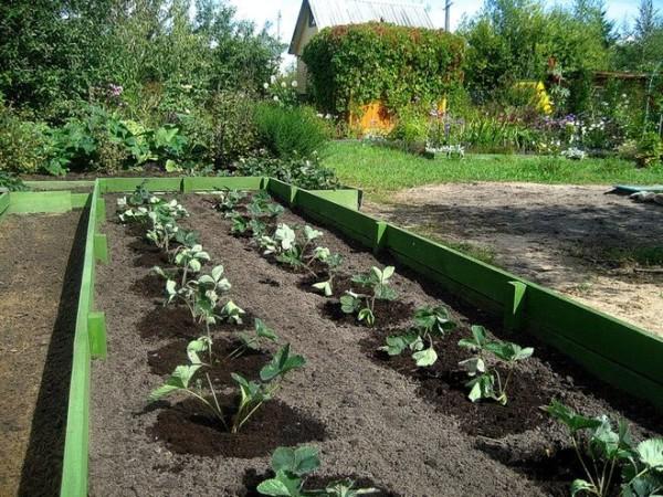 Огород, сад и участок в целом должны выглядеть соответствующе