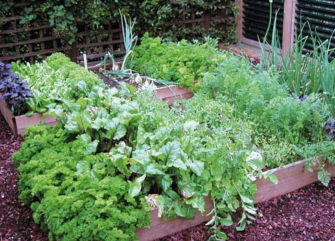Огород в сельском стиле