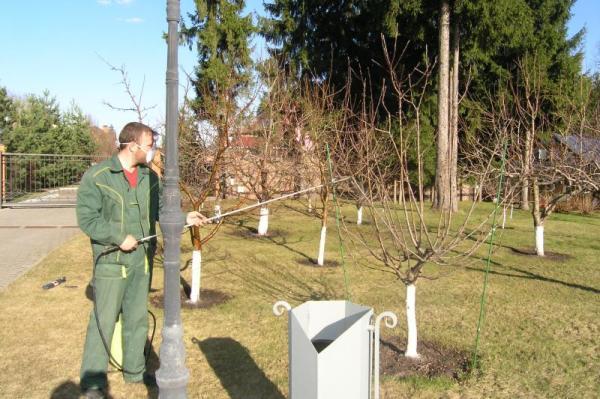 Опрыскивание деревьев сульфатом железа