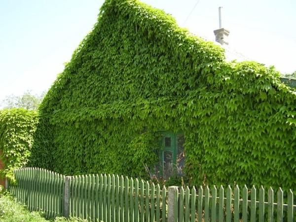 Оригинальное решение для декорирования старого дома