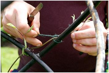Осенняя обрезка растений проходит с учетом особенностей сортов