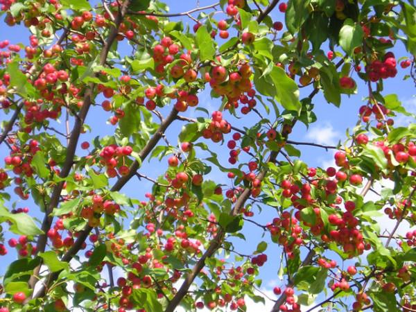 От размещения растений зависит будущий урожай