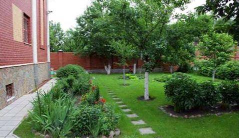 Плодовые деревья требуют внимательного подбора места размещения