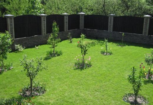 Плодовый молодой сад на дачном участке