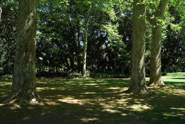 По тенистому саду очень приятно гулять в жаркий летний полдень, но расти под его плотными кронами ничего не сможет