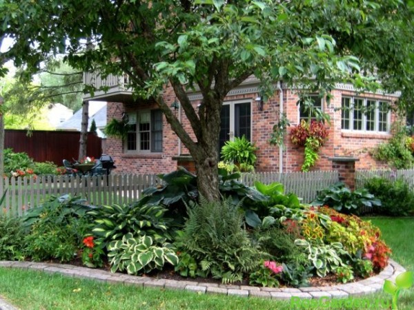Под деревьями нужно высаживать сорта, способные противостоять давлению корневой системы дерева