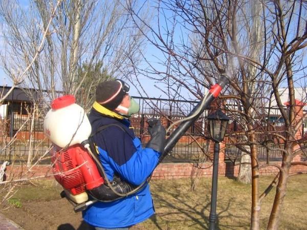 Пока не распустились почки, работы у садовода будет довольно много