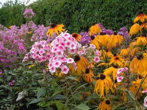 Посадив один раз многолетние цветы, вы будете любоваться ими не менее пяти-шести лет, а то и гораздо дольше