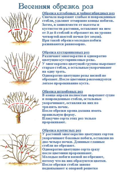 Правила обрезки для каждого вида.