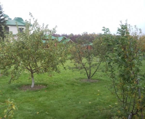Правильно выбирайте место под будущий фруктовый сад