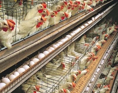 При правильном подходе к уходу проблем с яйцами не будет круглый год