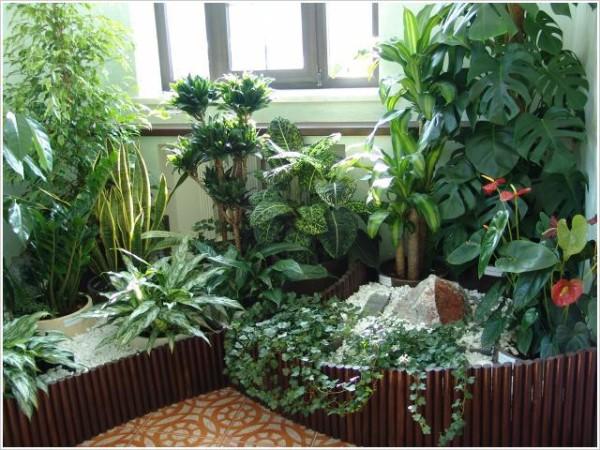 При выборе места для зимнего сада в квартире отдайте предпочтение самому освещенному