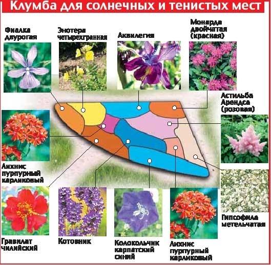 Пример удачного подбора цветущих культур