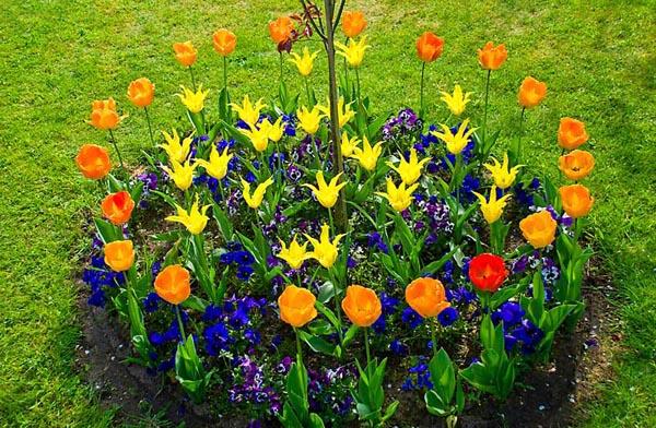 Пример засадки цветов кольцами