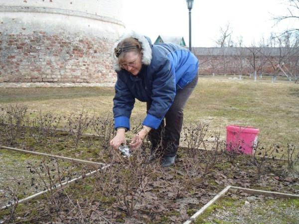 Проводите обрезку не только деревьев, но и кустарников