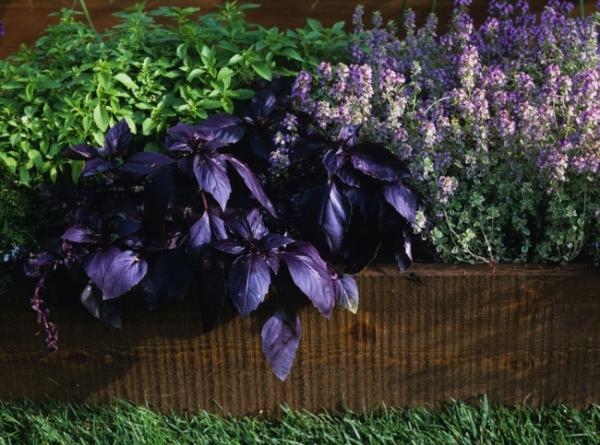 Пряные травы: выращивание на даче, уход и заготовка – весьма увлекательное и творческое занятие