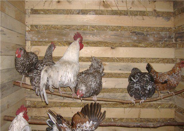 Птице должно быть удобно в ее домике.