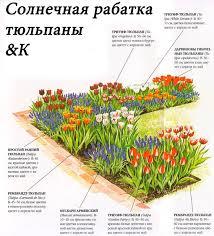 Рабатка - схема цветников на даче своими руками из тюльпанов
