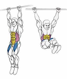 Работа мускулатуры при подъеме ног на перекладине.