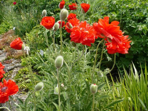Растения не требовательны к уходу