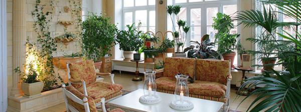Растения в квартирном зимнем саду
