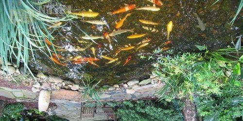 Рыбам в пруду нужно углубление для зимовки