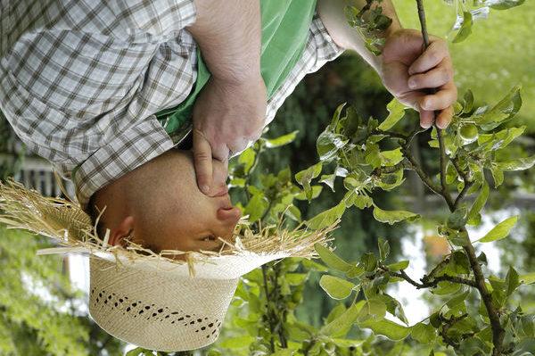С приходом дачного сезона ежедневно тысячи огородников задаются вопросом, как избавиться от хмеля на садовом участке, вывести ненавистных мышей и прожорливую тлю