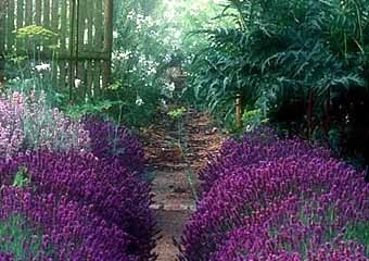 Сад в лугово-пейзажном стиле