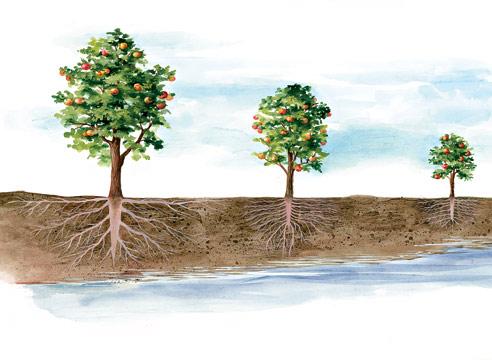 Схема корневой системы в грунте