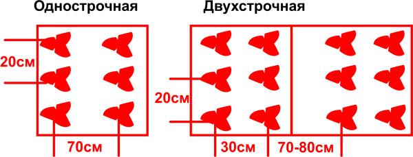 Схема посадки земляники