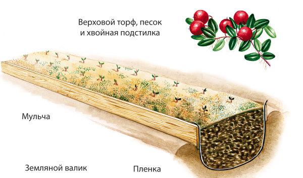 Схема создания грядки для клюквы и брусники