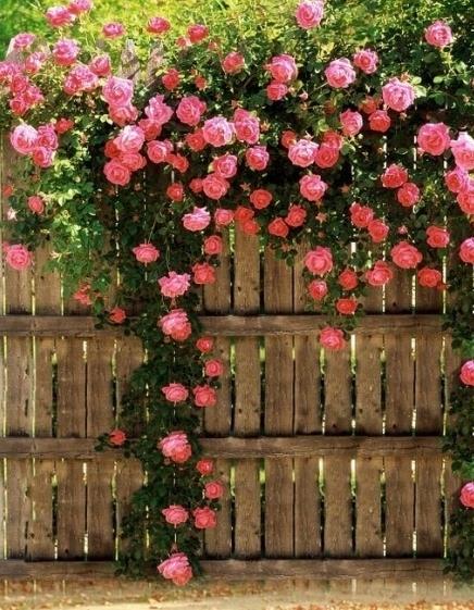 Сказочно красивое растение!