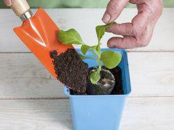 Таблетку с одним растением сажать очень просто