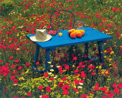 Такой ковер не требует регулярной стрижки и полива, а пикник здесь подарит настоящий отдых и чувство близости с природой.