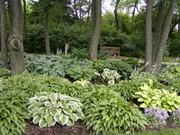 Тенелюбивые растения радуют своей пышной зеленью и декоративной листвой