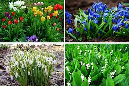 Тенелюбивых цветов существует довольно много