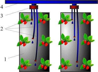 Трубки обеспечивают влагой каждое растение
