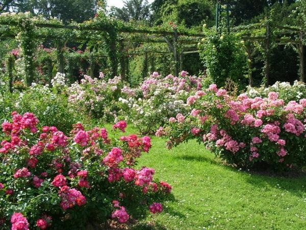 Цветники – украшение любого участка