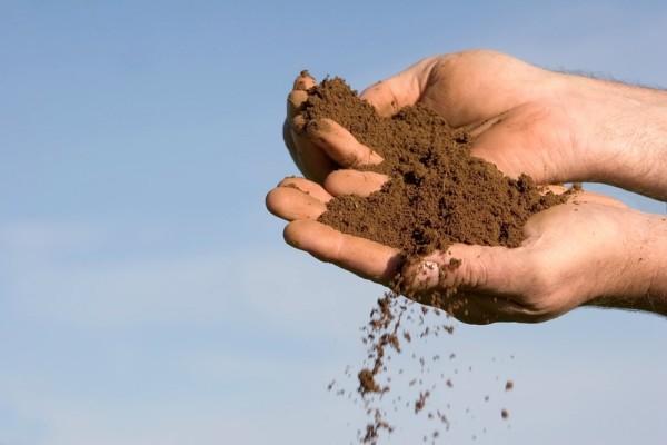 Цветок неприхотлив к почве, но лучше растет и цветет на грунтах, содержащих известь