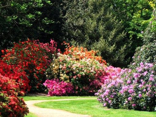 Цветущие кустарники – настоящее чудо