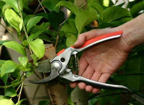 Всякие хитрости для сада и огорода не обошлись без советов о ремонте полезного инструмента – сектора