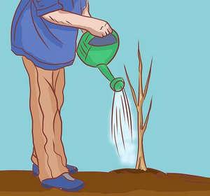 Выращивание черники в саду требует усилий