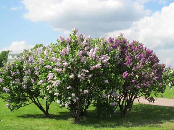 Высаживать растения лучше на ровных, хорошо освещенных площадках, как на этом фото
