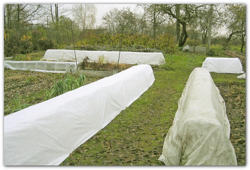 Защищайте растение на зиму