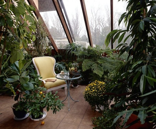 Зелено, уютно и спокойно – зимний сад предоставит эти чувства