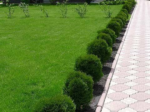 Живая изгородь носит скорее символический характер и необходима как элемент архитектурного ансамбля