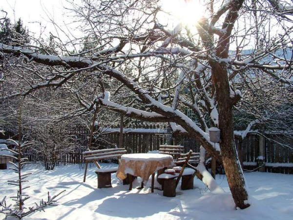 Зимние работы в саду и огороде  в первую очередь направлены на защиту от морозов