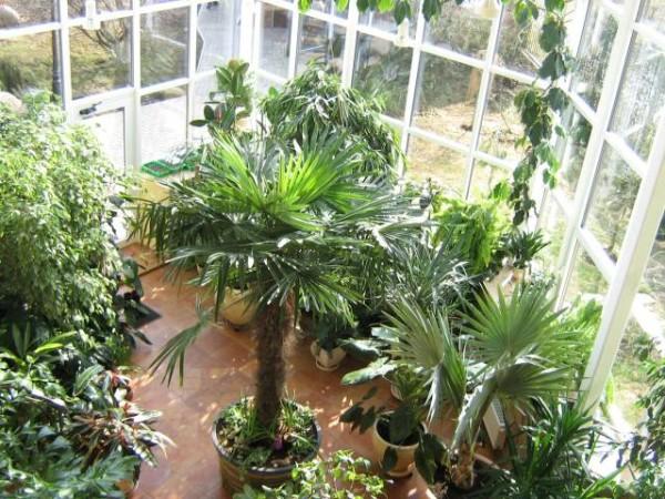 Зимний сад на лоджии или балконе будет радовать вас круглый год
